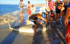magic world around: Shark Injured by Rope Cooperates With Brave Rescue...