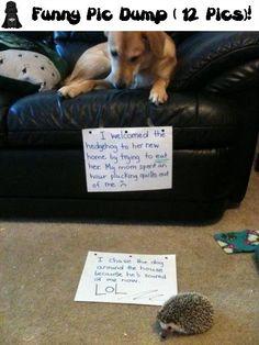 Funny Pic Dump ( 12 Pics) !