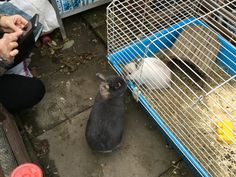 When rabbits are finally bonded