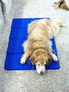 Dog Cooling Pad | Dog Cooling Mat - http://www.snugglezzz.com/cooling_pads_mats_for_dogs_p/pcm.htm