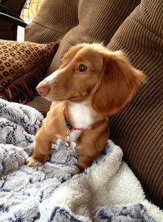 I think I heard something!
