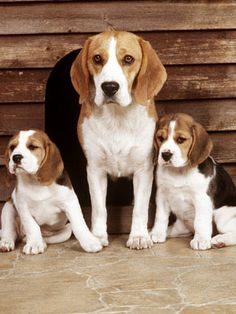 Two of these three pooches were on the cover of Life magazine. But all three belonged to a particular president. Click to find out which one!