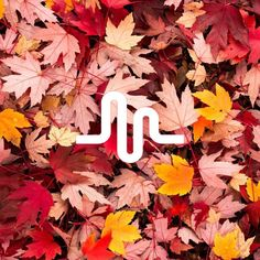 Musically logo fall