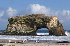 Natural Bridges State Beach - with its famous natural bridge, is an excellent vantage point for viewing shore birds, migrating whales, and seals and otters playing offshore. Tidepools offer a glimpse of life beneath the sea. Low tides reveal sea stars, crabs, sea anemones, and other colorful ocean life. The park also has a large area of coastal scrub meadows, with bright native wildflowers in the spring. Moore Creek flows down to the ocean through these meadows, forming a wetlands in the…