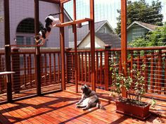 I love this idea. A great way for your cat to get some sunshine! #cats #catio #CatRun