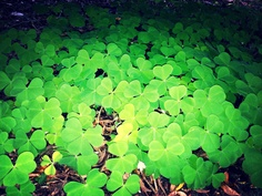 Photo taken by Iyshia Brenner Clovers, British Columbia, Beautiful