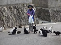 Japanese Cat Island. http://awareness-time.com/?p=2814