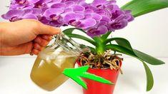Hnojivá z obchodu už nekupujem, vďaka rade mojej susedy mám orchidey ako z výstavy: Najsilnejší životobudič pre izbovky je úplne zdarma! Diy Planters, Planter Pots, Orchids, Table Decorations, Flowers, Youtube, Passion, Gardening, Gardens