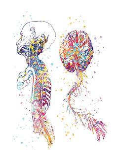 Human Anatomy Art, Medical Wallpaper, Biology Art, Systems Art, Aquarell Tattoo, Brain Art, Medical Art, Dibujos Cute, Medical Illustration