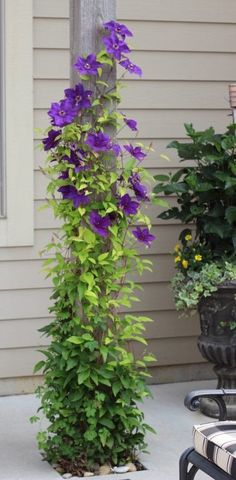Ideas from 20 planters from my neighborhood! - A purple clematis growing up a p. - Ideas from 20 planters from my neighborhood! – A purple clematis growing up a post on a back por - Fall Planters, Flower Planters, Flower Pots, Diy Planters, Potted Flowers, Potted Plants, Container Flowers, Container Plants, Container Gardening