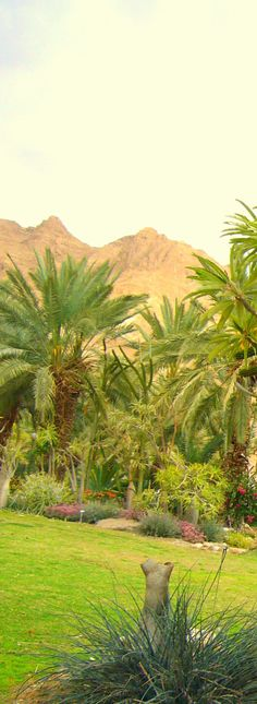 Amazing, isn't it? A park in the middle of a desert. Ein Gedi national park Israel