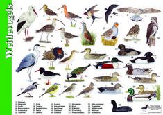 van der Meulen - birds of the meadow Animals Of The World, Animals And Pets, Animal Plates, Bird Tree, Nature Journal, Fauna, Whimsical Art, Bird Watching, Natural History