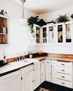 Plants above the cabinets