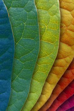 Panton Leaves