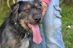 Mac - Adopta-me  Cão - Rafeiro Comum  Idade: Jovem Sexo: Macho Tamanho: Médio Pêlo: Castanho e Preto