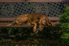 Mia sleeping by Gerald Tallafuss on 500px