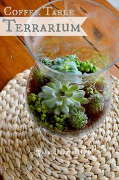 Blue Ribbon Kitchen: It's so EASY Being GREEN | Coffee Table Terrarium.