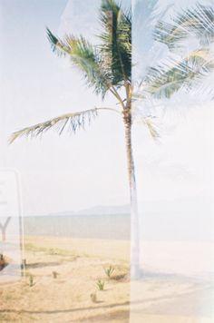 film beach palm tree tropical townsville film camera lomography diana mini