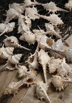 ESCORT CARDS? 3.99 SALE PRICE! With spiraling bodies, spikes and spines, these natural shells will bring natural flair to your home or party décor. The Murex Shells garnis...