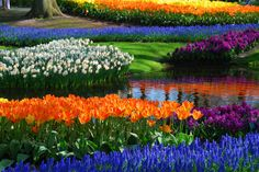 Keukenhof - Holland.  Worlds largest flower garden