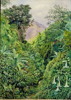 Marianne North... Valley behind the Artist's House at Gordonstown, Jamaica