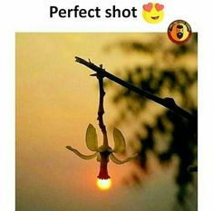 Bitch I thought this was a fuckin banana lamp.I'm wheezing 😂 Stunning Photography, Sunset Photography, Creative Photography, Amazing Pics, Amazing Art, Awesome, Pretty Pictures, Cool Photos, Interesting Facts About World