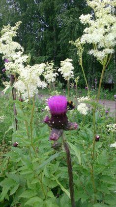 Kukkia ja mehiläinen
