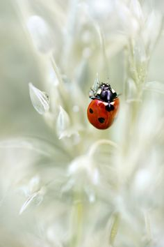 if this small and stylishly outfitted insect lands near me I'm very happy . To admit: I'm superstitious, the same when I was a kid, and believe that a ladybug brings a luck, at least for a little while!