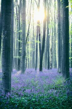 "There is a way that nature speaks, that land speaks. Most of the time we are simply not patient enough, quiet enough, to pay attention to the story. ~ Linda Hogan  ~ Image ""Hallerbos wakes up"" by Geoffrey Van Beylen"