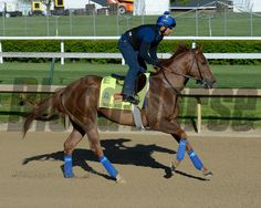 Caption: War Story<br /> Horses on the track at Churchill Downs on Sun. April 27, 2015, in Louisville, Ky., in preparation for the Kentucky Derby and Kentucky Oaks.<br /> Works4_27_15 image877<br /> Photo by Anne M. Eberhardt