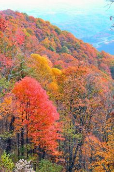 Harlan KY      I love autumn; maybe because what's when I was born  dy