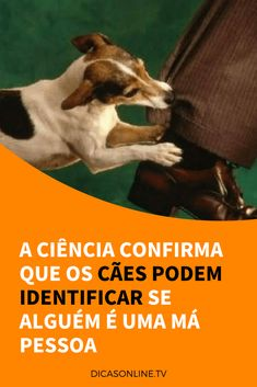 Cães inteligentes