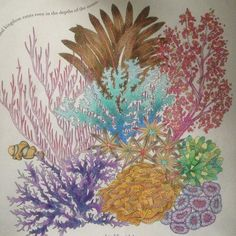 Animal Kingdom Adult ColoringColoring BooksColouringAnimal