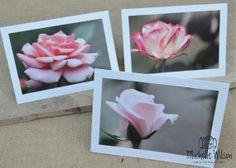 Rose Garden Card Pack...3 cards... Leu by TurningPagePhotos