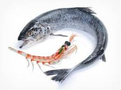 Why Krill Oil is Far Better Than Fish Oil ~ CURENATURE.com