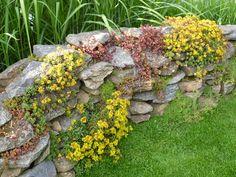 Natursteinmauer in voller Blüte - Bilder und Fotos