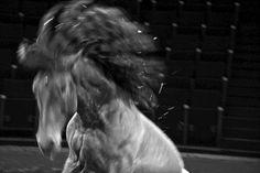 Un deux trois Cheval !!!! by MO Lo cicero
