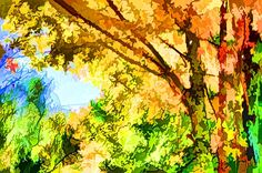 Bright colored leaves on the branches in the autumn forest 2 by Jeelan Clark Fall Trees, Autumn Forest, Bright Colors, Coupon, Leaves, Wall Art, Painting, Gif Background, Autumn Trees