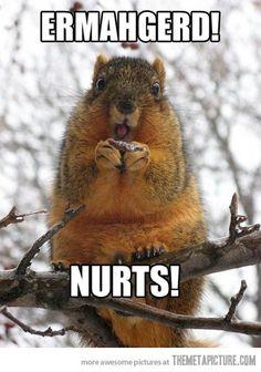 funny squirrel nuts ermahgerd