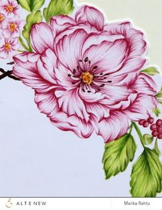 coloring done by Marika. She used the outline flower image from the Beautiful Day stamp set. Altenew Cards, Peonies Bouquet, Peony, Colouring Techniques, Coloured Pencils, Color Pencil Art, Penny Black, Flower Images, Watercolor Cards