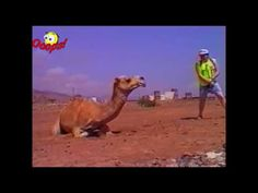 Funny Animals Attacts Caught On Tape - Funny Animals Compilation [FUNNY ANIMALS HUMOR]  we have started making a long term goal with this channel and it is really dedicated to welfare activities for society dropped family and also a poor fund. Please subscribe our channel and help to others with us.  http://ift.tt/2cgHyms https://twitter.com/EnTerTainNCTB http://ift.tt/2bVHpBw [FUNNY ANIMALS HUMOR] Keywords: funny animals compilation funny animals talking funny animals vines funny animals…
