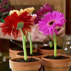 Get Ice Cream Flower Pot Desserts Recipe from Food Network Ree Drummond, Food Network Recipes, Food Processor Recipes, Frozen Desserts, Sweet Desserts, Frozen Treats, Sweet Recipes, Yummy Recipes, Baking Recipes