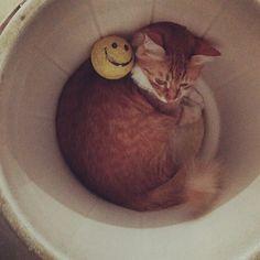 #cat #pet #cute #funny #smile