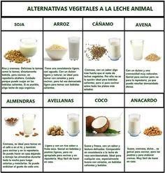 Alternativas y Beneficios para la salud de las diferentes leches vegetales