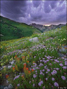 ✯ Alpine Basin Sunset - Utah