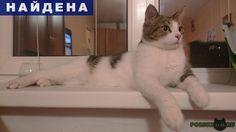 Найден кот около александра невской лавр г.Санкт-Петербург http://poiskzoo.ru/board/read31394.html  POISKZOO.RU/31394 Найден кот около Александра Невской Лавры. Мальчик, на левом плече серое пятно. Ласковый, домашний.   РЕПОСТ! @POISKZOO2 #POISKZOO.RU #Найдена #кошка #Найдена_кошка #НайденаКошка #Санкт #Петербург #СанктПетербург #СПБ #Санкт_Петербург