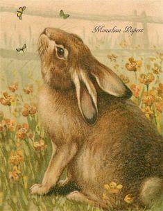 Bunny & Butterflies - E84-bunny, butterfly