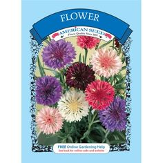 Burpee forget me not blue bird seed packet walmart and products flower seed american flower walmart mightylinksfo