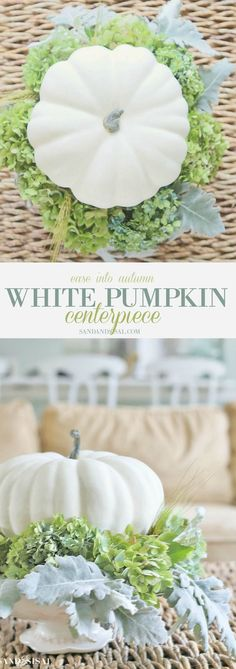 Ease into Autumn with a beautiful and easy to make White Pumpkin Fall Centerpiece. It would make a lovely Thanksgiving Centerpiece too! My kind of holiday decorations! White Pumpkin Centerpieces, Succulent Centerpieces, Autumn Centerpieces, Table Centerpieces, Wedding Centerpieces, Autumn Decorating, Pumpkin Decorating, Decorating Ideas, White Pumpkins
