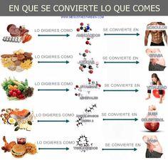 ¿En qué se convierte lo que comes?